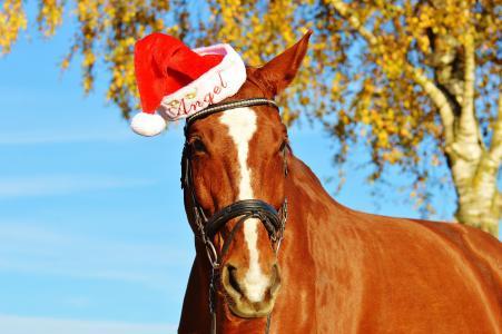马, 圣诞节, 圣诞老人的帽子, 有趣, 动物, 骑, reiterhof