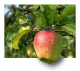 苹果, 水果, 树上苹果, hdr, ebv, 出框架, 释放