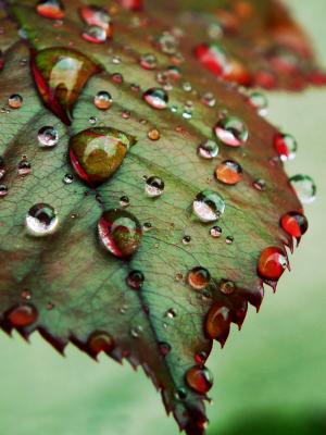 滴眼液, 叶子, 自然, 秋天, 雨, 特写, 绿色的颜色
