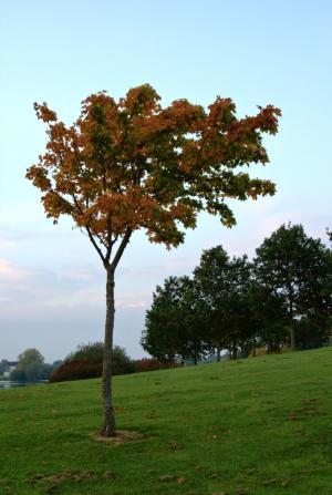 公园, 秋天, 10 月, 树