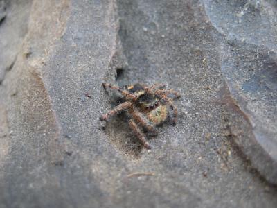 蜘蛛, 昆虫, 有毛, 网络蜘蛛, 令人毛骨悚然, 蜘蛛