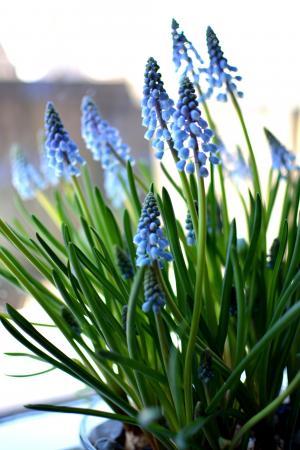 风信子, 花, 春天, 充满活力, 夏季, 光明, 颜色