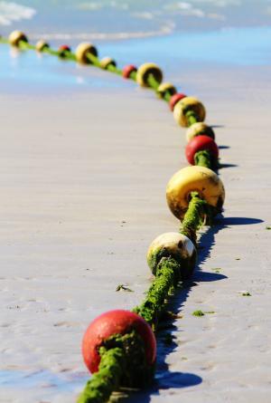 障碍浮游物, 海滩, 浮标, 青苔, 自然, 海洋, 户外