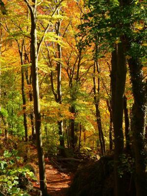 森林, 秋天的树林, 多彩, 树木, 叶子, 秋天