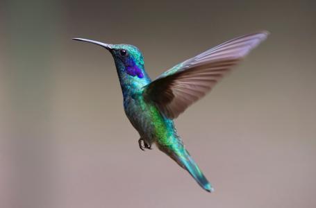 蜂鸟, 鸟, 蜂鸟, 飞, 春天的衣服, 多彩, 彩虹