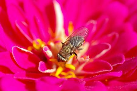 飞, 开花, 绽放, 夏季, 昆虫, 自然