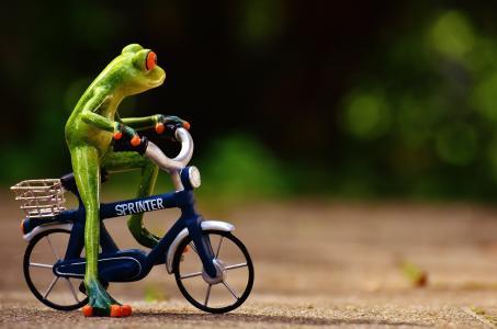 青蛙, 自行车, 有趣, 可爱, 甜, 图, 驱动器