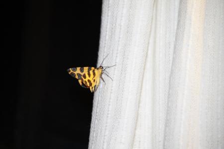 蝴蝶, 更改, 运气