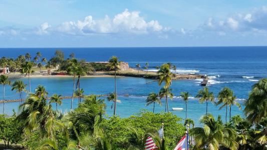 度假, 波多黎各, 热带, 岛屿, 海洋, 椰子