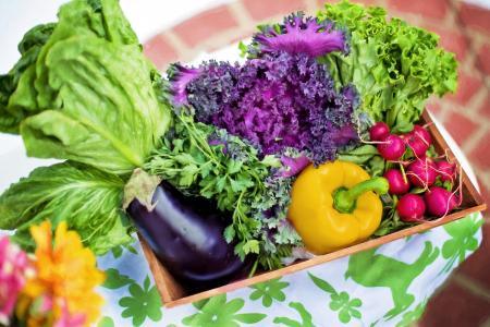 蔬菜, 花园, 收获, 有机, 绿色, 园艺, 生菜