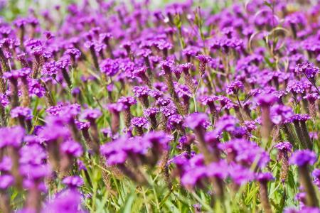 花草甸, 花, 自然, 草甸, 野花, 夏天草地, 植物