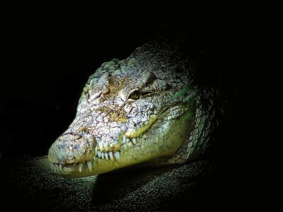 鳄鱼, 短吻鳄, 爬行动物, 动物, 危险, 捕食者, 牙齿