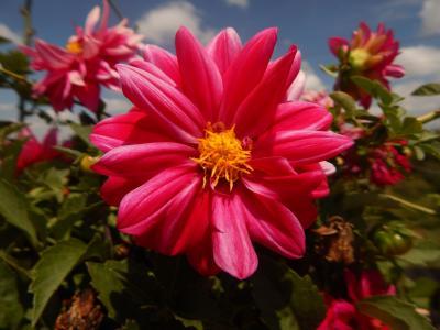 花, 自然, 粉红色的花, 宏观, 植物, 花