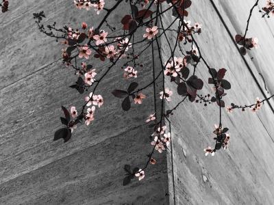 花, 分支机构, 春天, 自然, 绽放, 高角度视图, 户外
