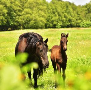马, 母亲, 小马驹, 围场, 夏季, 牧场, 年轻的动物