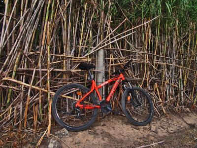 自行车, 甘蔗, 线索, 旅游, 漫步, 夏季, 自然