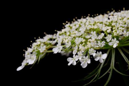 绽放, 开花, 特写, 植物区系, 花, 花瓣, 植物