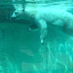 北极熊, 动物园, 坦克, 极地, 熊, 动物, 白色