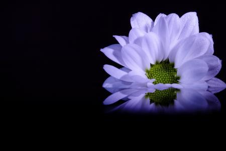 花, 大丽花, 花香, 装饰, 花瓣, 植物, 紫色