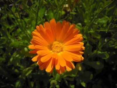金盏花, 万寿菊, 花, 橙色, 关闭, 花卉园, 自然