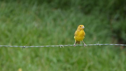鸟类, 动物, 自然, 森林, 野生动物
