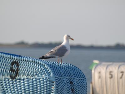 沙滩椅, 海鸥, 海岸, 海, 北海, 天空, 德国北部