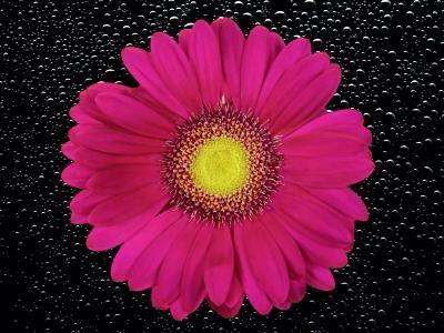 花, 开花, 绽放, 菊花, 自然, 植物, 夏季