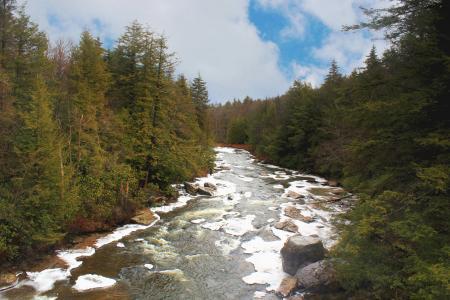 河, 松树, 树木, 森林, 自然, 景观, 山