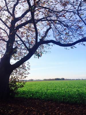 土地, 绿色, 草甸, 树, 公园, 景观, 木材