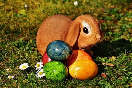 复活节, 复活节兔子, 鸡蛋, 复活节彩蛋, 草甸, 春天, 复活节快乐