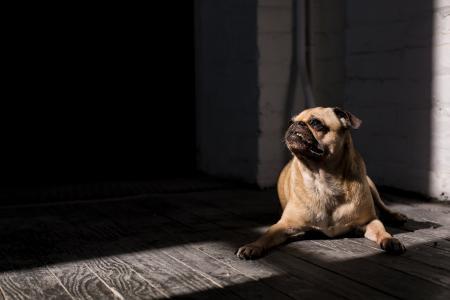 狗在阳光下