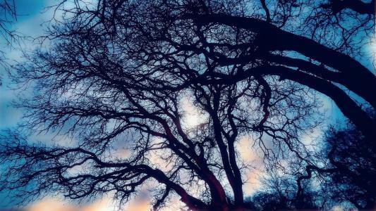 树木, 天空, 日落, 自然, 户外, 树, 分公司