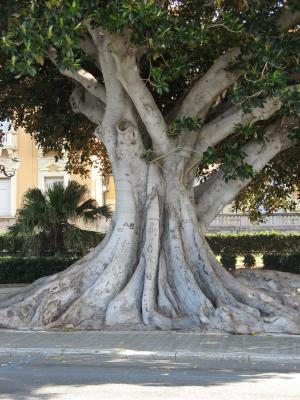 卡拉布里亚, 意大利, 雷焦卡拉布里亚, 太阳, 夏季, 树, 木兰