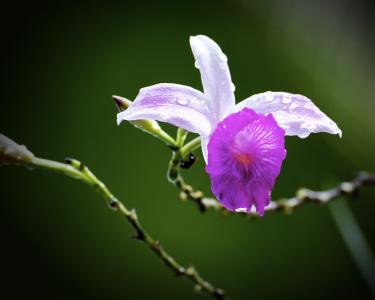 花, 兰花, 自然, 花瓣, 开花, 热带, 花香