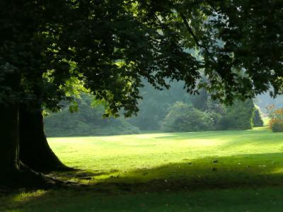 树, 公园, 光