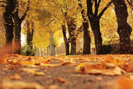 树木, 大道, 秋天, 走了, 心情, 户外, 秋天的树叶