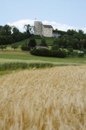 关闭哈布斯堡, aargau, 瑞士, 玉米田, 景观