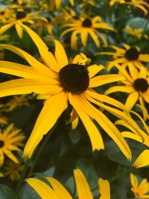 花, 黄色, 黄色的花, 春天, 夏季, 植物, 开花
