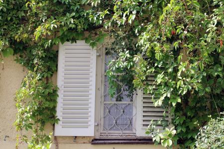 窗口, 常春藤, 葡萄酒的合作伙伴, 墙上, 立面, 登山者, 嵌