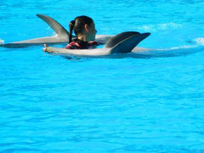 动物, 海豚, 海洋哺乳动物, 动物园, 海豚馆