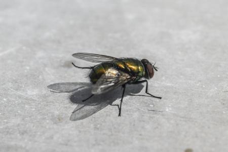 飞, 昆虫, 动物, bug, 自然, 宏观