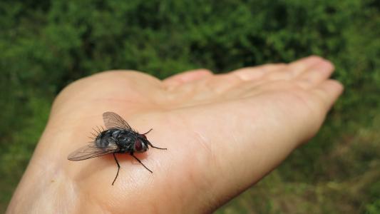 飞, 昆虫, 手, bug, 动物, 野生动物, 草甸