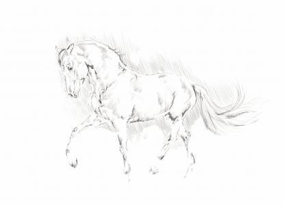 插图, 马, 动物, 铅笔, 黑色和白色, 素描, 水