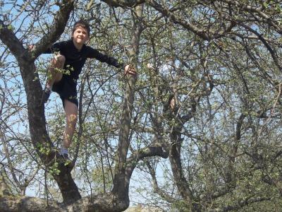 儿童, 男孩, 乐趣, 爬上, 树