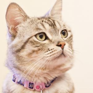 猫, 目光, 等待, 家猫, 宠物, 家养动物, 一种动物