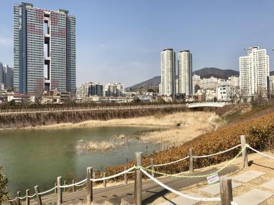 湖, 公园, 韩国国家, 城市景观, 建筑, 城市天际线, 城市场景
