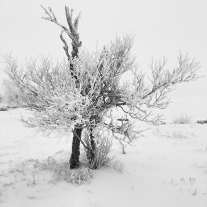 冬天, 雪, 树, 自然