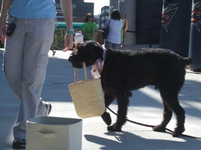 狗, 服从, 宠物, 动物, 听话, 犬, 品种