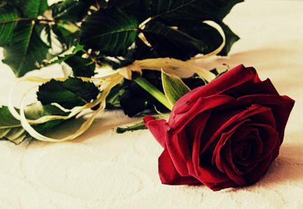 上升, 爱, 浪漫, 花, 红色, 浪漫, 垃圾摇滚