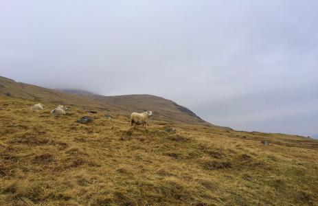 棕色, 羔羊, 草, 字段, 云计算, 山, 山绵羊